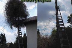 Arborystyka2-Jardach